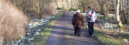 Walking among the snowdrops in Bridgend woods, Islay